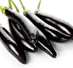 Lilek vejcoplodý 'Gobi' - Solanum melongena 'Gobi'