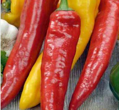 Paprika chilli 'Cayenský pepř' - Capsicum annuum 'Cayenský pepř'