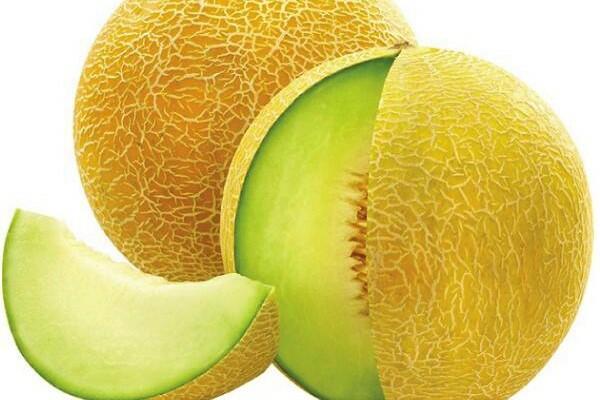 Meloun cukrový 'Solartur' - Cucumis melo 'Solartur'