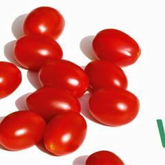 Rajče tyčkové F1 'Mirado Red' - Lycopersicon esculentum 'Mirado Red'