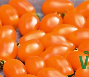 Rajče tyčkové F1 'Mirado Orange' - Lycopersicon esculentum 'Mirado Orange'
