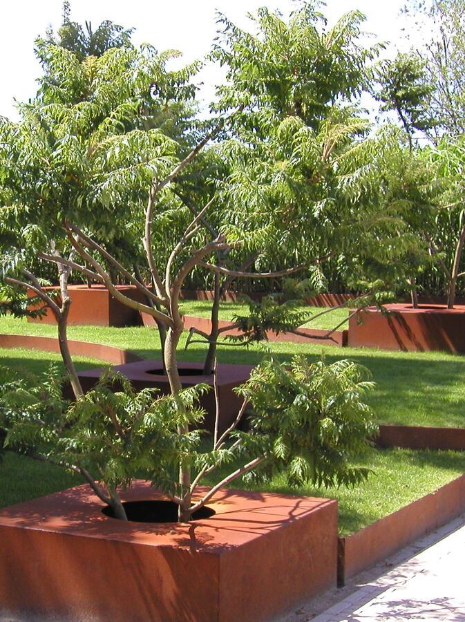 Škumpa orobincová 'Lacinata' - Rhus typhina 'Laciniata'