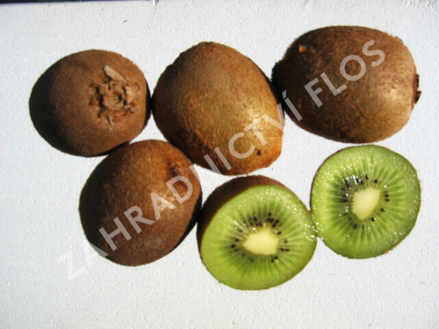 Aktinidie lahodná, kiwi - samičí 'Hayward' - Actinidia deliciosa 'Hayward'