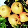 Jabloň zimní 'Denár' - Malus domestica 'Denár'