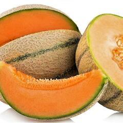 Meloun cukrový - roubovaný 'Anasta' - Cucumis melo 'Anasta' - roubovaný