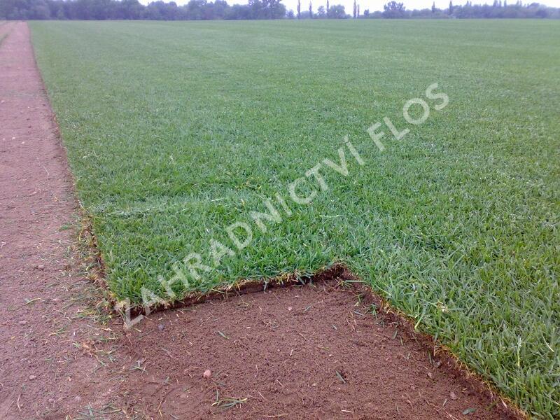 Trávníkový koberec standard - Trávníkový koberec standard