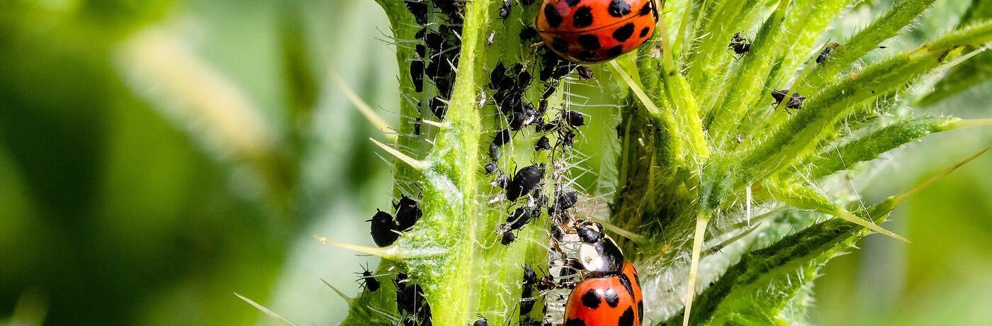ladybug-3478620_1920