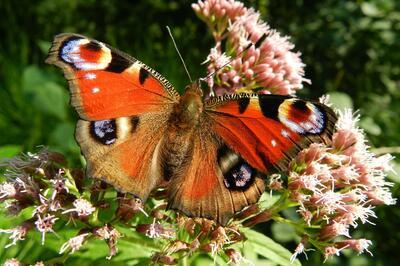 butterfly-176156_1920