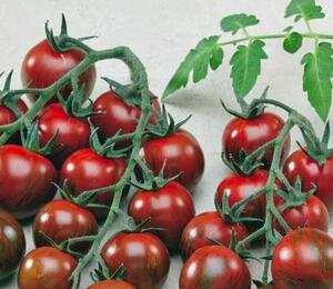 Rajče tyčkové 'Tigrino' - cherry - Lycopersicon esculentum 'Tigrino'