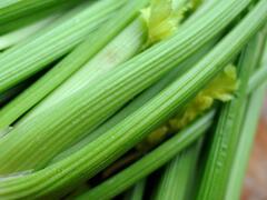 Celer řapíkatý 'Nuget' - Apium graveolens v. dulce 'Nuget'