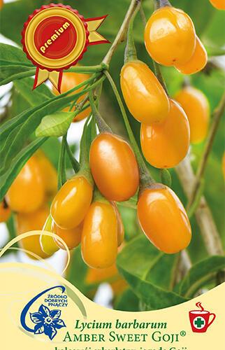 Kustovnice čínská 'Amber Sweet Goji' - Lycium barbatum 'Amber Sweet Goji'