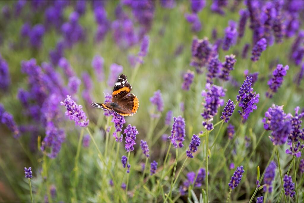 Rostliny pro včely a motýly