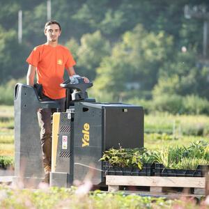 Rostliny nejprve posbíráme z pěstebních ploch