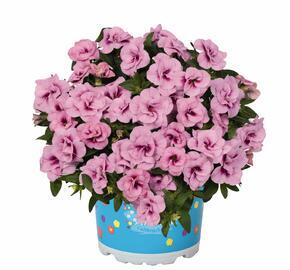 Minipetunie, Million Bells 'Aloha Double Soft Pink Eye' - Calibrachoa hybrida 'Aloha Double Soft Pink Eye'