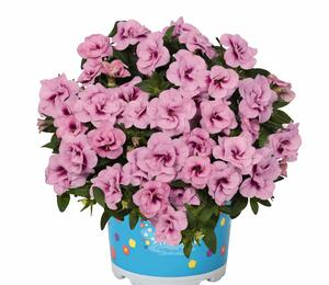 Minipetunie, Million Bells 'Aloha Double Soft Pink Eye' - Calibrachoa hybrida 'Aloha Double Soft Pink Eye'
