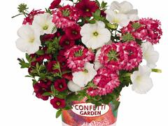 Balkonový mix Confetti Garden 'Shocking Red' - Balkonový mix Confetti Garden 'Shocking Red'