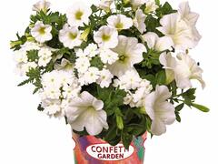 Balkonový mix Confetti Garden 'White Win' - Balkonový mix Confetti Garden 'White Win'