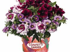 Balkonový mix Confetti Garden 'Shocking Purple' - Balkonový mix Confetti Garden 'Shocking Purple'