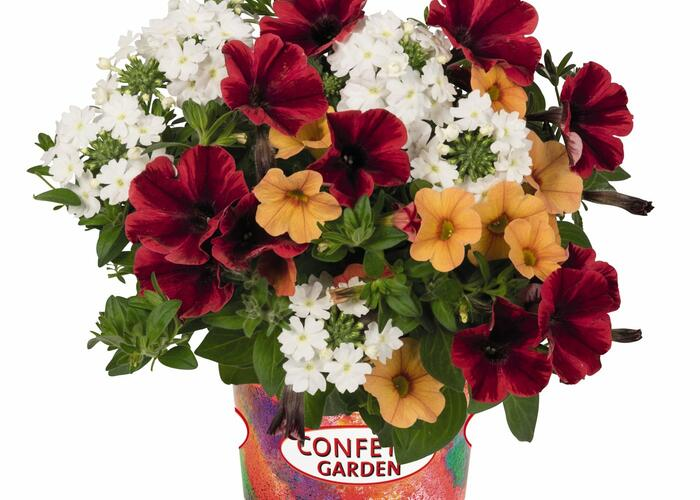 Balkonový mix Confetti Garden 'Fire Flash' - Balkonový mix Confetti Garden 'Fire Flash'