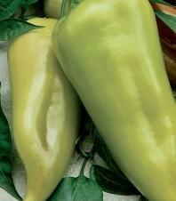Paprika polní 'Beja' - Capsicum annuum 'Beja'