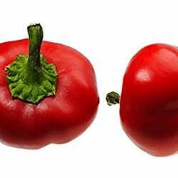 Paprika polní 'Dumas' - Capsicum annuum 'Dumas'