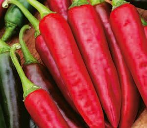 Paprika chilli 'Gutera' - Capsicum annuum 'Gutera'