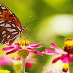 Rostliny pro motýly