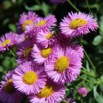 Trvalky kvetoucí na jaře