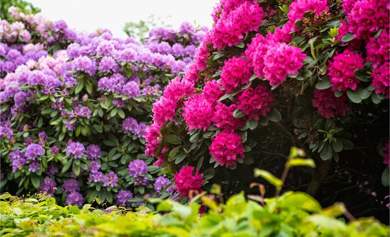 Vřesovištní rostliny kvetoucí na jaře