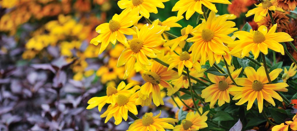 trvalky-kvetouci-na-podzim