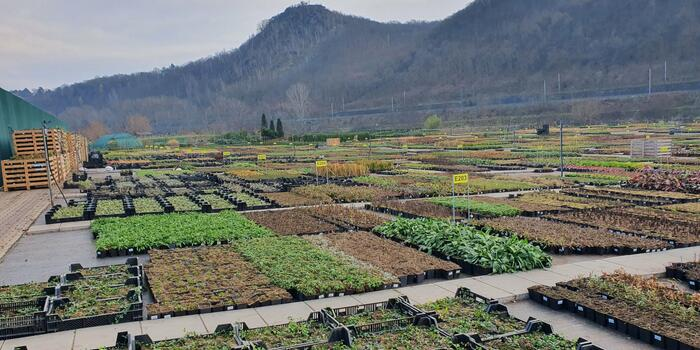 Zima v zahradnictví Flos