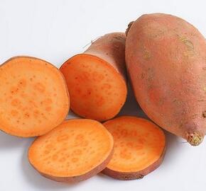 Povíjnice batátová 'Erato Orange' - Ipomoea batatas 'Erato Orange'