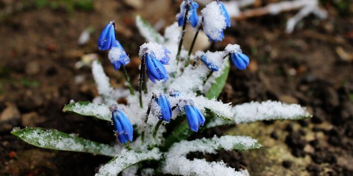 Jarní mrazíky