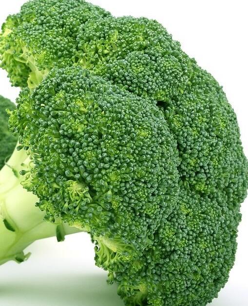 Brokolice raná 'Limba' - Brassica oleracea var. cymosa 'Limba'