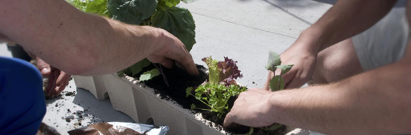 Balkon zelenina