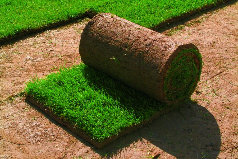 Trávníkový koberec AGRO - Trávníkový koberec AGRO