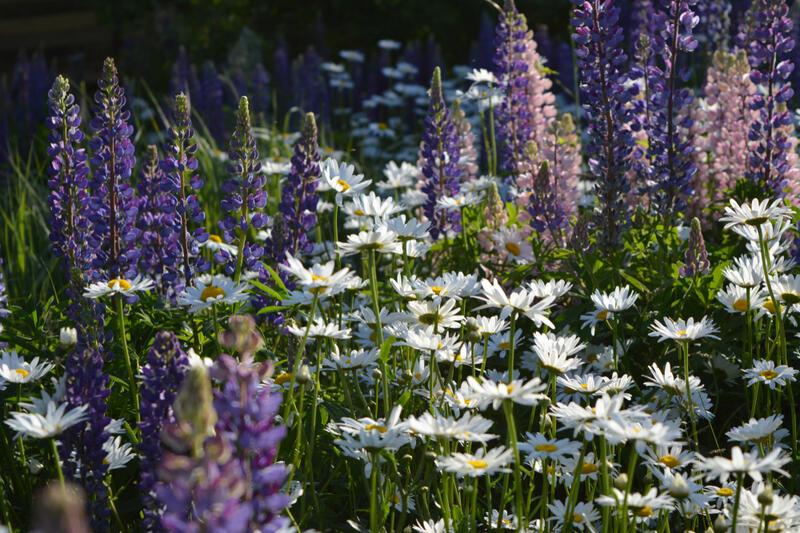 Zahalte svou zahradu do bílých a fialových odstínů!