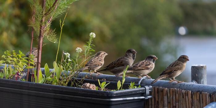 ptaci na balkone