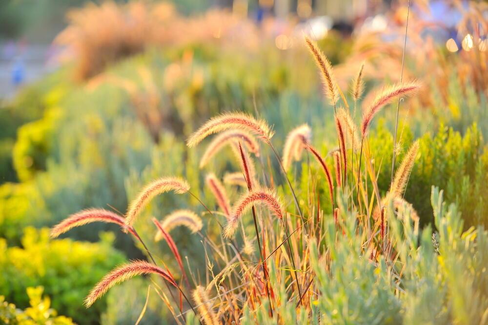 traviny v zahradě