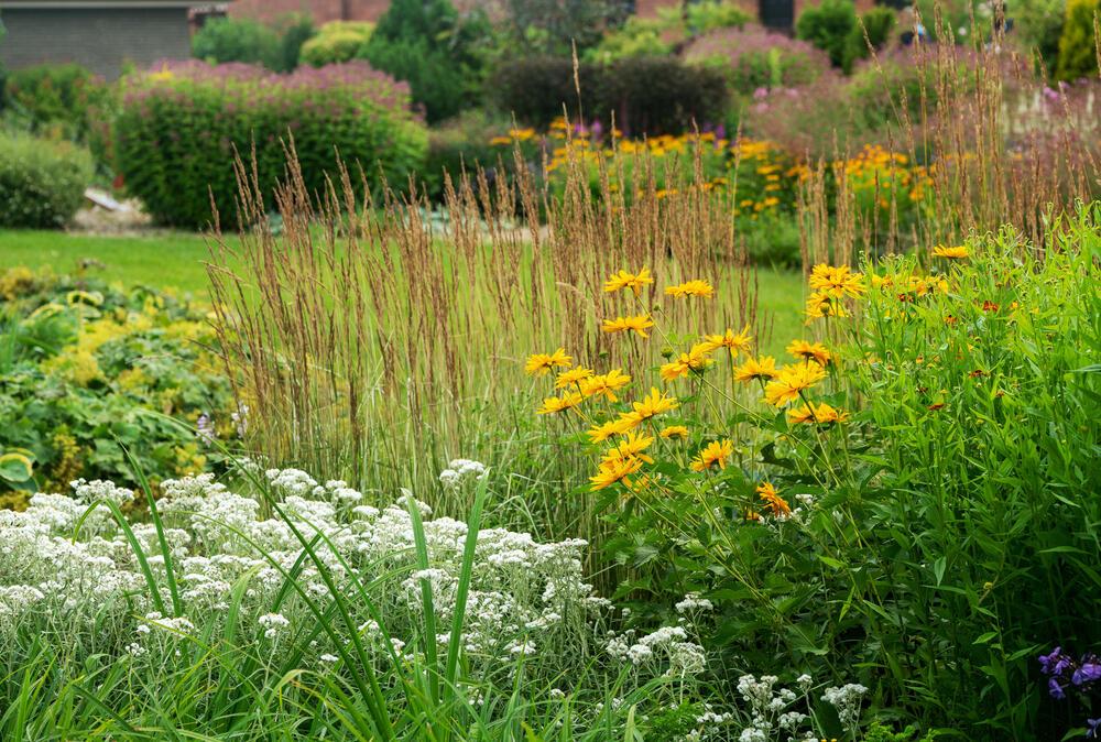 trvalková rabata mix rostlin plesnivky třapatky kontryhele hosty astry