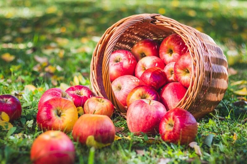 Ovocné stromky a keře pro letní výsadbu se slevou 10 % do 29. 7.