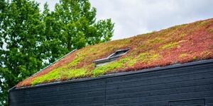 zelená střecha_sedum mix