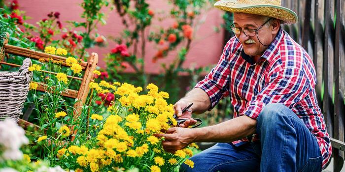 starší pán na zahradě pečuje o trvalky