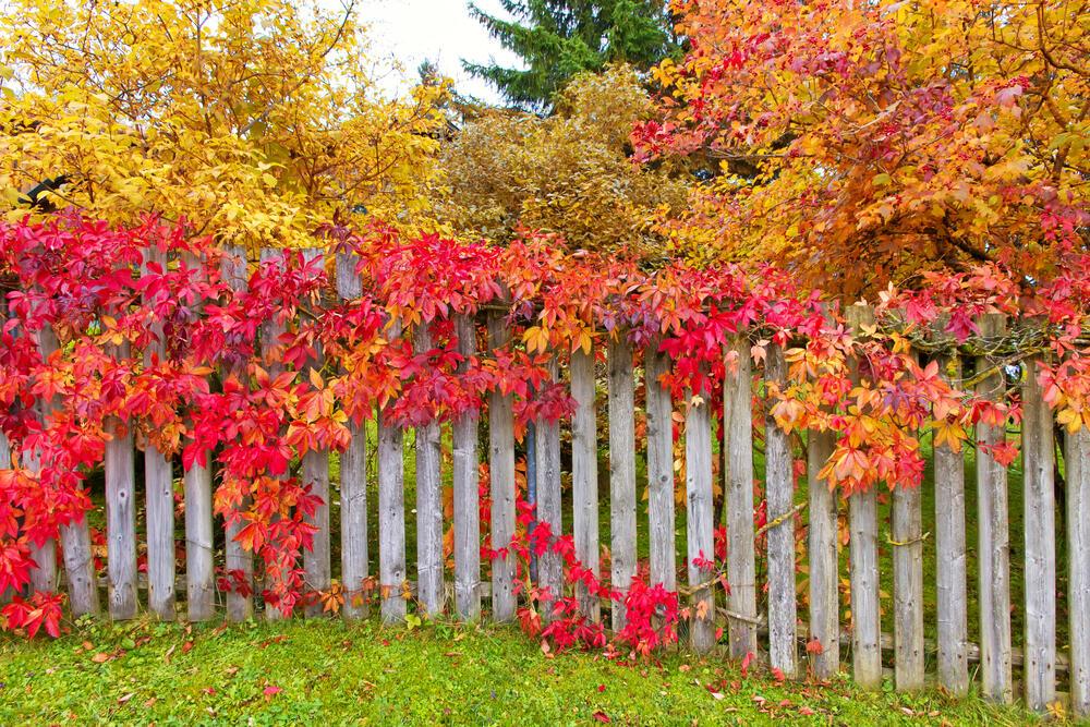 podzimní barvy v zahradě