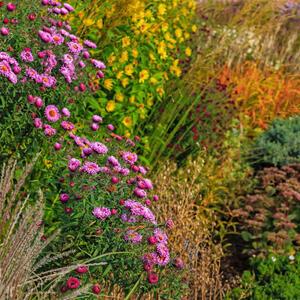 podzimní trvalkový záhon