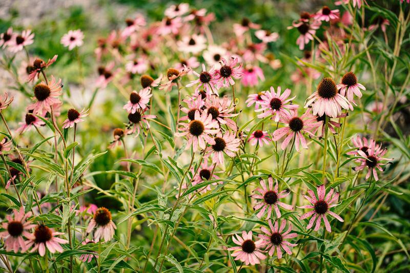 Trvalky kvetoucí celé léto