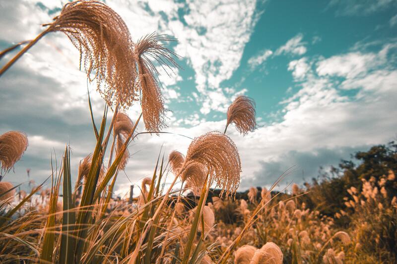 Mrazuvzdorné okrasné trávy