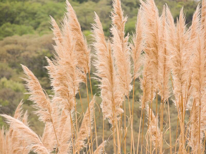 Vysoké traviny (nad 1m)