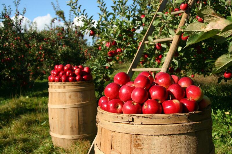 Ovocné stromky a keře se slevou 10%
