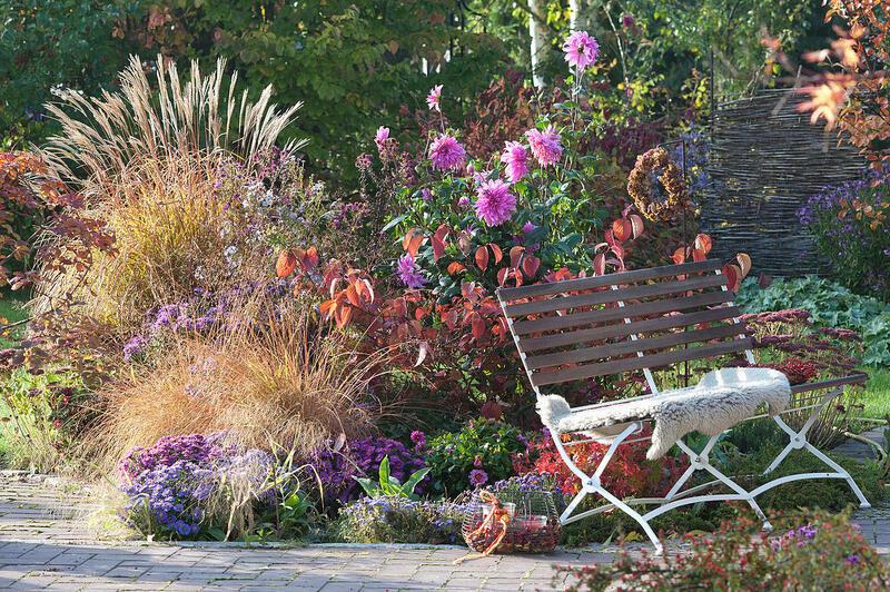 Podzimní sleva 10% na všechny trvalky a traviny